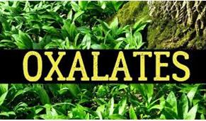 The Oxalates Debate